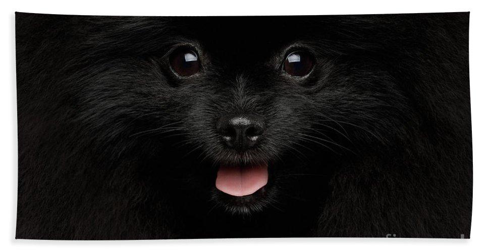 Dog Hand Towel featuring the photograph Portrait of Happy Pomeranian Spitz by Sergey Taran