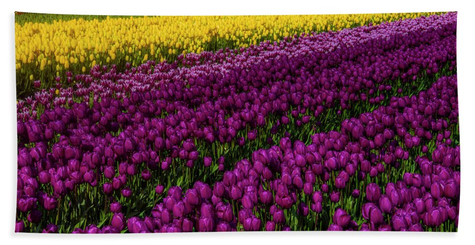 Tulip Bath Towel featuring the photograph Colorful Spring Tulip Fields by Garry Gay