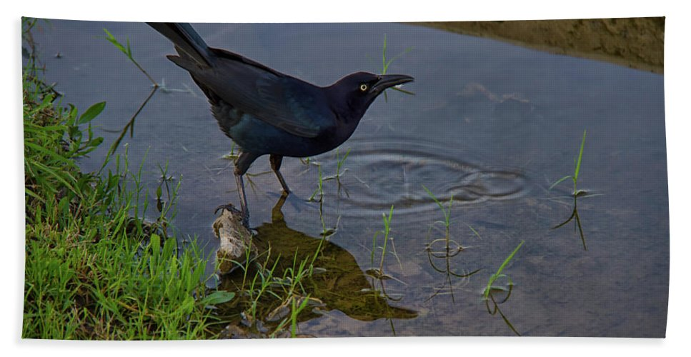 Common Grackle Bath Sheet featuring the photograph Common Grackle by Debby Richards