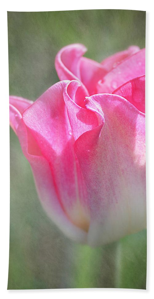 Plants Bath Towel featuring the photograph Crown Of Dynasty - The Triumph Tulip by Teresa Wilson