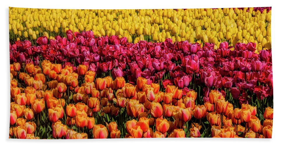 Tulip Bath Towel featuring the photograph Dreaming Of Endless Colorful Tulips by Garry Gay