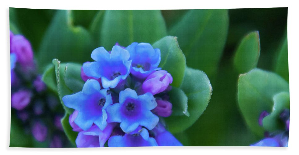 Dwarf Bluebell Bath Towel featuring the photograph Dwarf Bluebell Detail by Cascade Colors