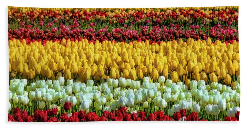 Tulip Hand Towel featuring the photograph Endless Beautiful Tulip Fields by Garry Gay