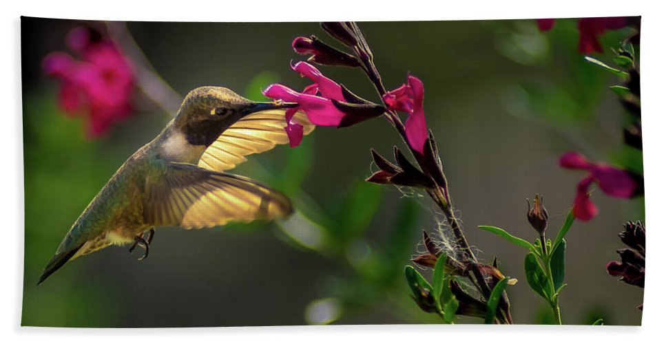 Hummingbird Bath Sheet featuring the photograph Glowing Wings Of A Hummingbird by Cecilio Martinez