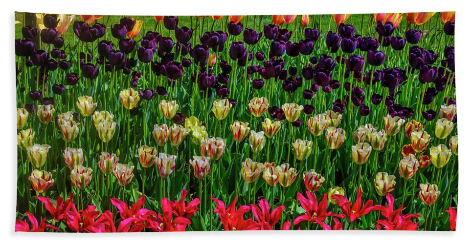 Tulip Bath Towel featuring the photograph Gorgeous Tulip Farm Flowers by Garry Gay