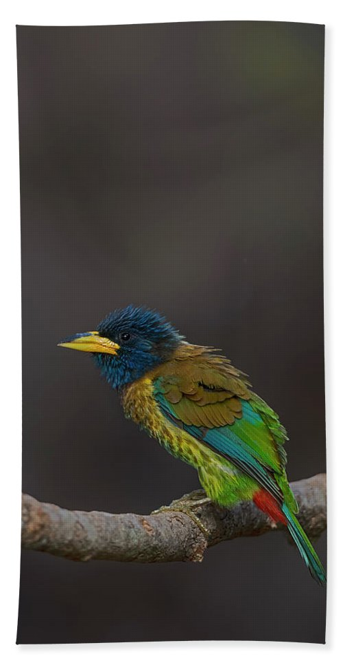 Bird Images For Print Hand Towel featuring the photograph Great barbet by Uma Ganesh