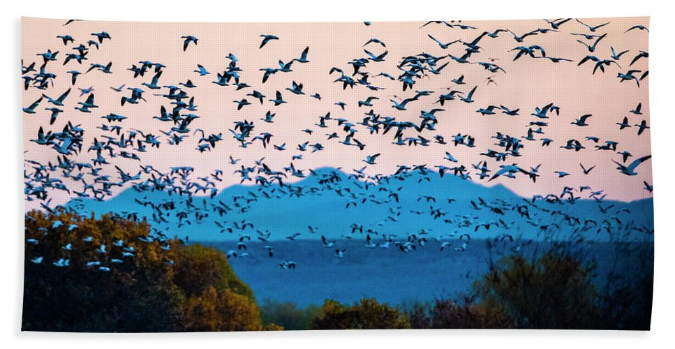 Photography Bath Towel featuring the photograph Herd Of Snow Geese In Flight, Soccoro by Panoramic Images