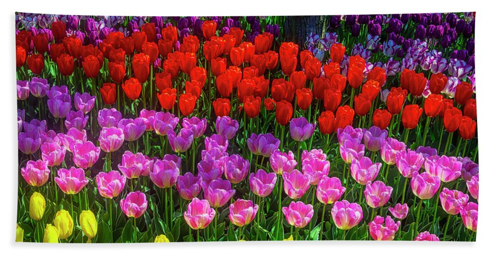 Tulip Hand Towel featuring the photograph Hidden Garden Of Beautiful Tulips by Garry Gay