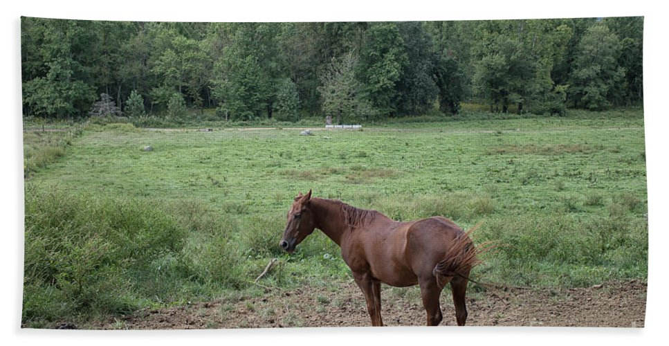 Horse Bath Sheet featuring the photograph Horse Print 900 by Paulette Thomas