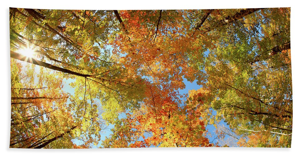 Canopy Bath Towel featuring the photograph Langlade County Canopy by Todd Klassy