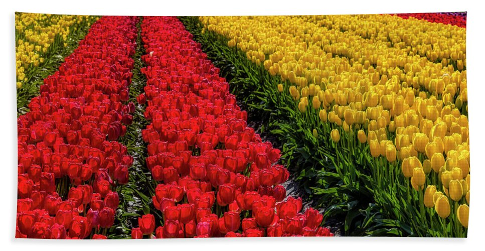Tulip Bath Towel featuring the photograph Long Row Of Red Tulips by Garry Gay
