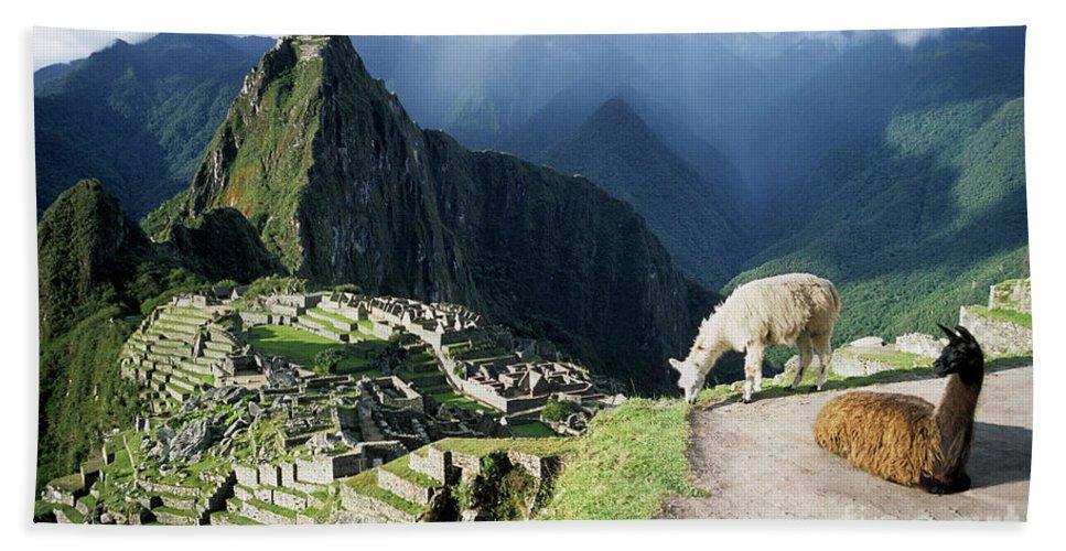 Machu Picchu Hand Towel featuring the photograph Machu Picchu And Llamas by James Brunker