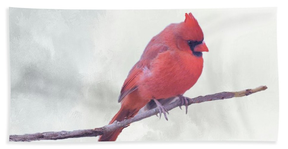 Songbird Bath Sheet featuring the photograph Male Northern Cardinal by Janette Boyd