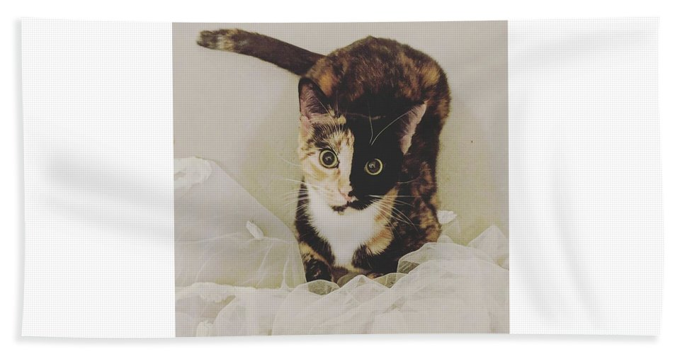 Cute Cat Bath Towel featuring the photograph Meet Star by Star And Ray