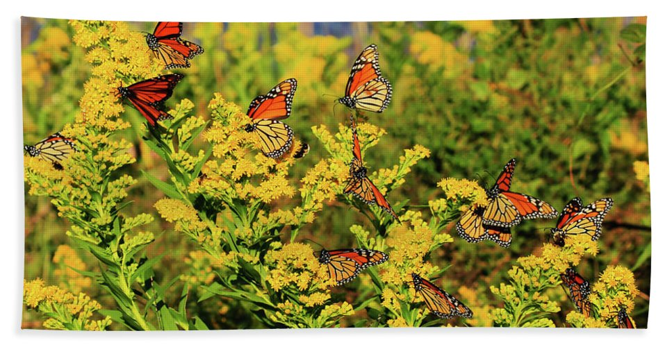 Butterfly Bath Sheet featuring the photograph Monarch Gathering 1 by Roger Becker