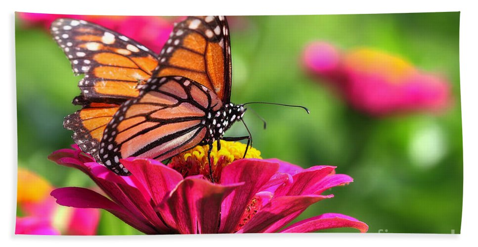 Pink Hand Towel featuring the photograph Monarch Visiting Zinnia by Angela Rath