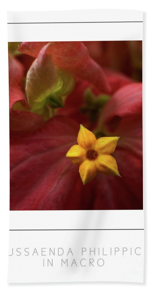 Mussaenda Phillippica Bath Sheet featuring the photograph Mussaenda Philippica In Macro Poster by Mike Nellums