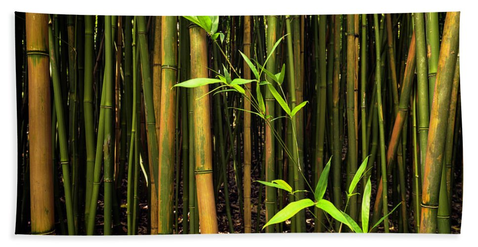 Bamboo Hand Towel featuring the photograph New Bamboo Shoot by Christopher Johnson