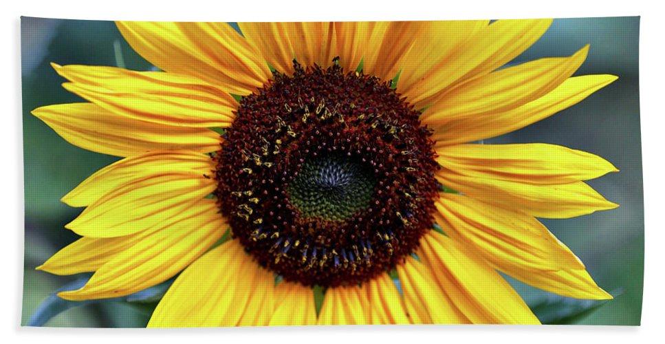 Sunflower Bath Sheet featuring the photograph One Bright Sunflower by Carol Groenen