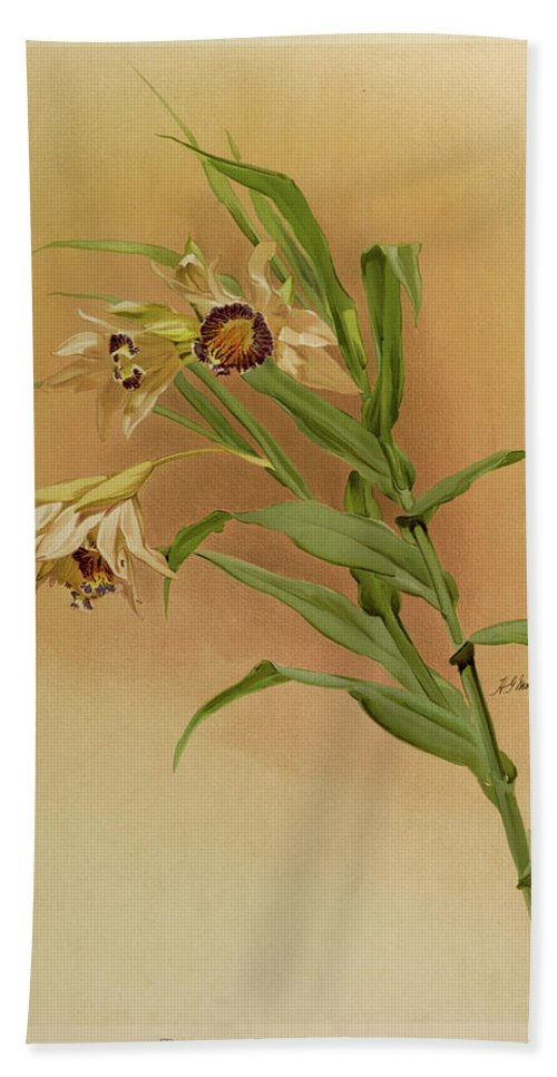 Sander Hand Towel featuring the painting Orchid, Thunia Brymeriana by Henry Frederick Conrad Sander