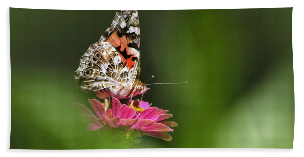Painted Lady Butterfly Bath Sheet featuring the photograph Painted Lady Butterfly At Rest by Christina Rollo
