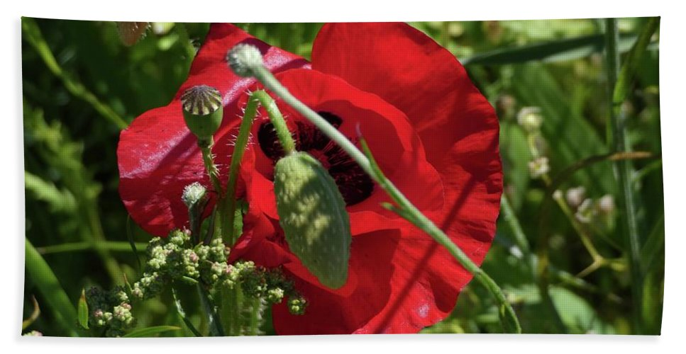 Poppy Bath Towel featuring the photograph Poppy by Ingrid Huetten