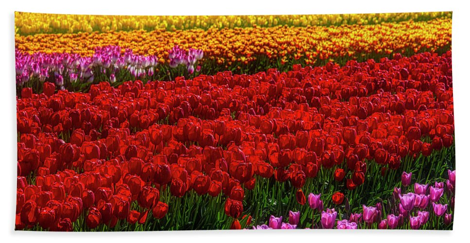 Tulip Bath Towel featuring the photograph Rainbow Tulips by Garry Gay