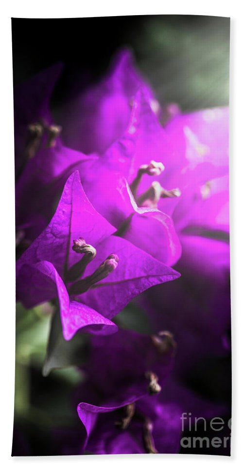 Flower Bath Towel featuring the photograph Rays Of Bougainvillea by Jorgo Photography - Wall Art Gallery