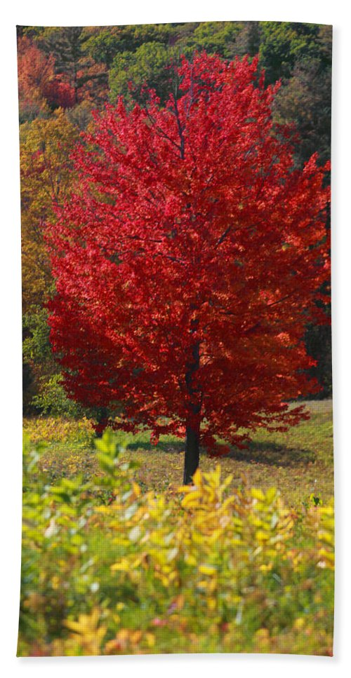 Red Maple Tree Bath Towel featuring the photograph Red Maple Tree by Trevor Slauenwhite