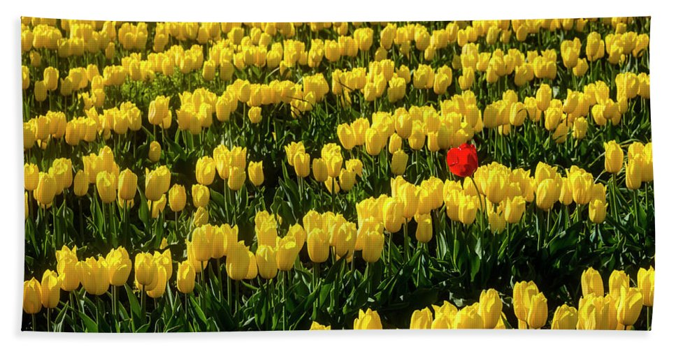 Tulip Bath Towel featuring the photograph Red Tulip In Field Of Yellow by Garry Gay