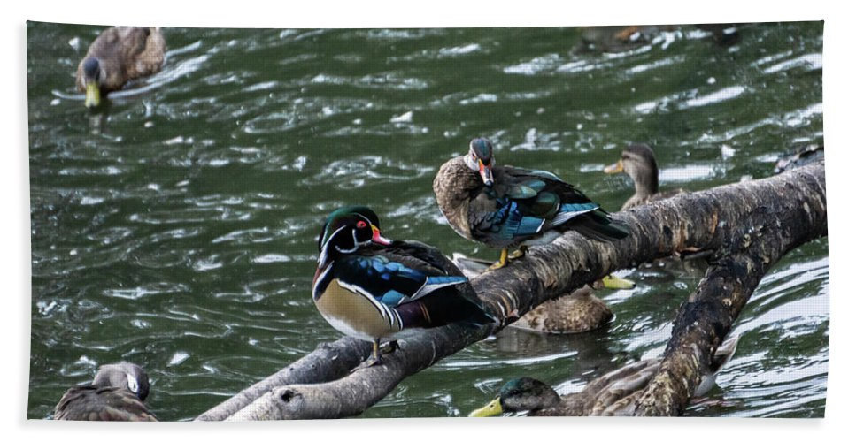 Duck Hand Towel featuring the photograph Resting Ducks by Rob Olivo
