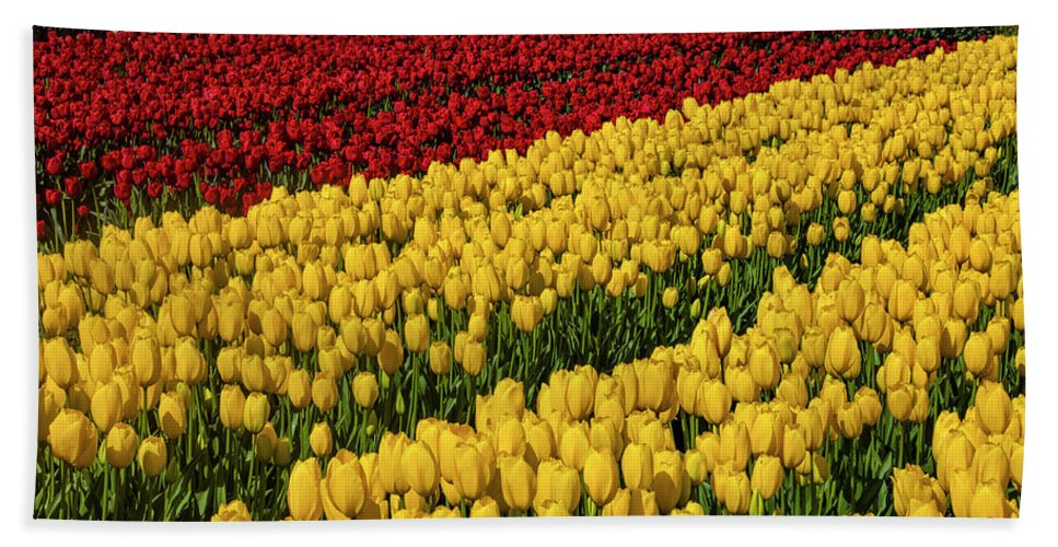Tulip Bath Towel featuring the photograph Rows Of Yellow And Red Tulips by Garry Gay