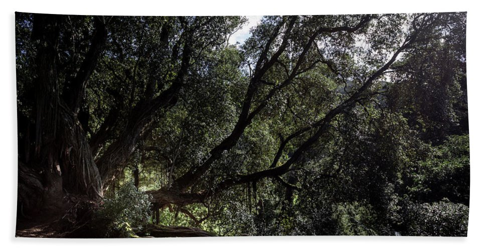 Celtic Hand Towel featuring the photograph Secular Tree by Edgar Laureano