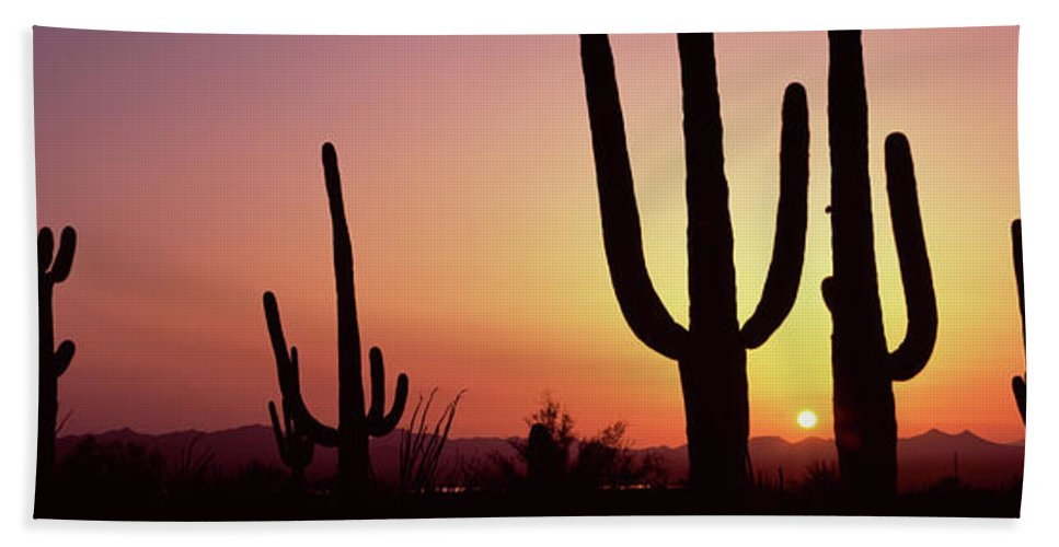 Photography Hand Towel featuring the photograph Silhouette Of Saguaro Cacti Carnegiea by Panoramic Images