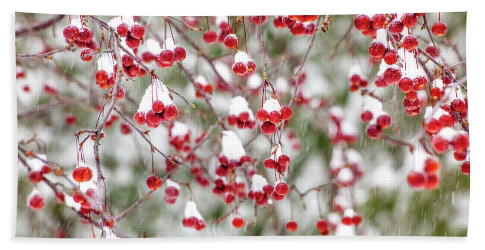 Winter Bath Towel featuring the photograph Snow Covered Red Berries by Trevor Slauenwhite
