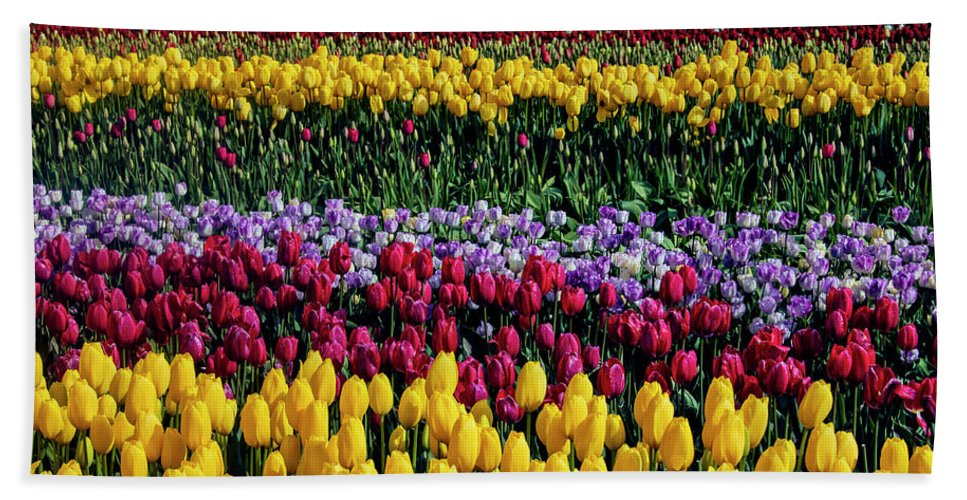 Tulip Hand Towel featuring the photograph Spectacular Rows Of Colorful Tulips by Garry Gay