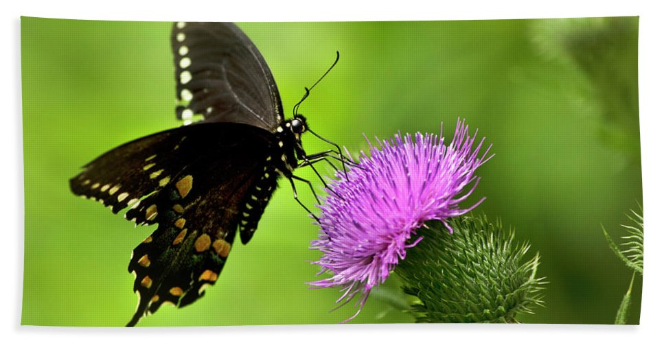Butterfly Hand Towel featuring the photograph Spicebush Swallowtail Butterfly by Christina Rollo