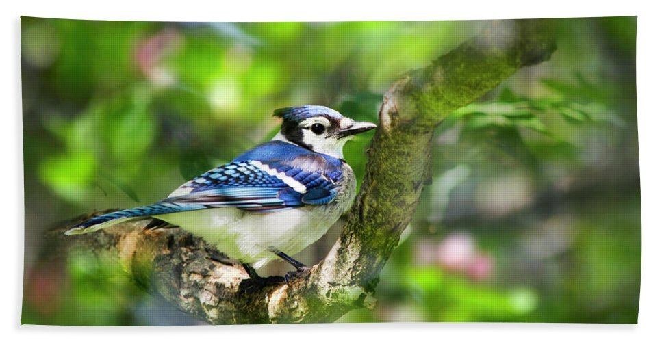 Blue Jay Bath Sheet featuring the photograph Spring Blue Jay by Christina Rollo