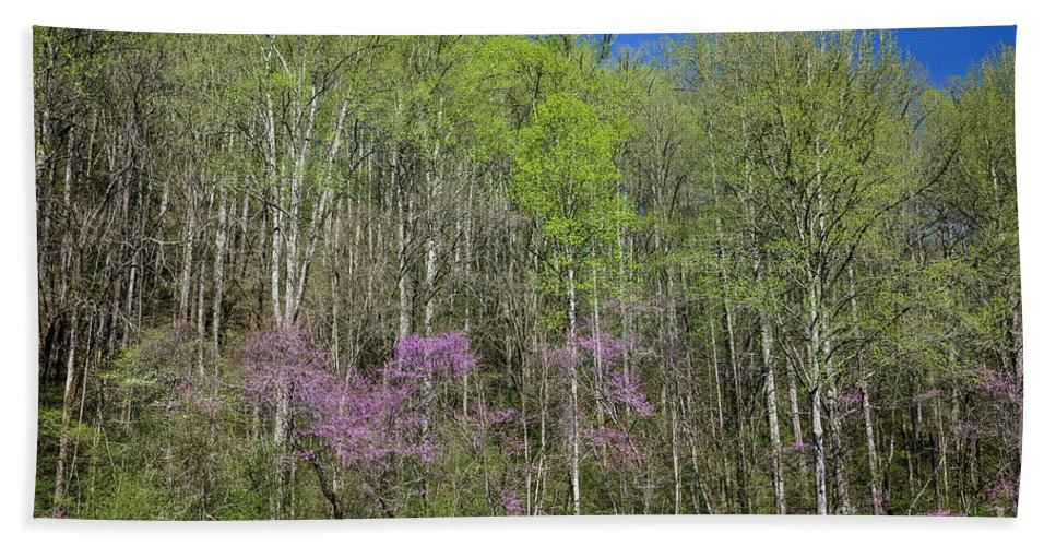Spring In Great Smoky Mountains National Park Hand Towel featuring the photograph Spring In Great Smoky Mountains National Park 2 by Felix Lai