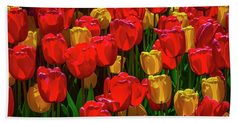 Tulip Bath Towel featuring the photograph Spring Tulips In Red And Yellow by Garry Gay