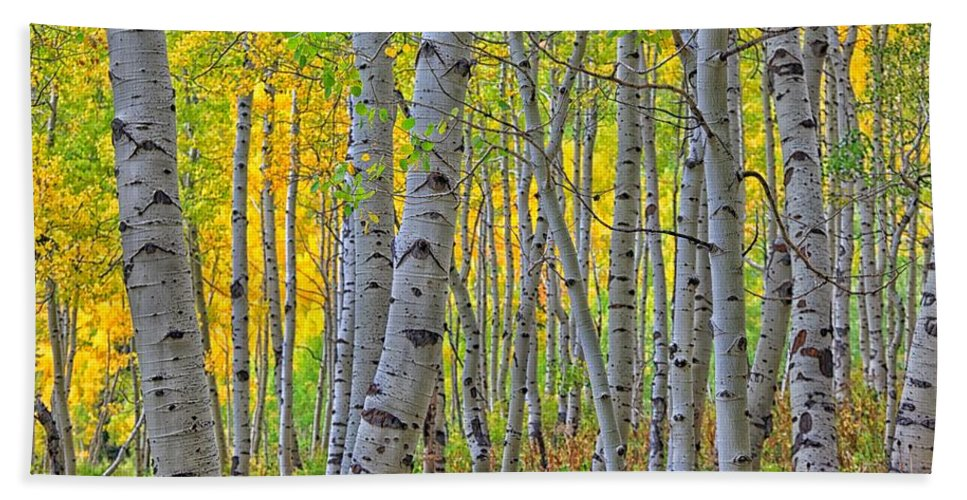 Aspens Bath Towel featuring the photograph The Gentleness Of Aspens 1 by Mitch Johanson