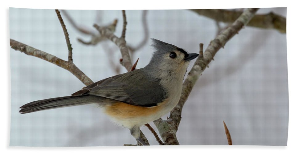 Titmouse Hand Towel featuring the photograph Titmouse Winter Morning Cutie by Betsy Knapp