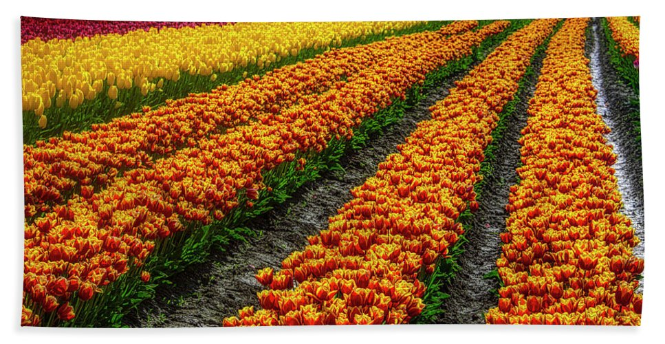 Tulip Bath Towel featuring the photograph Tulip Bulb Farm by Garry Gay