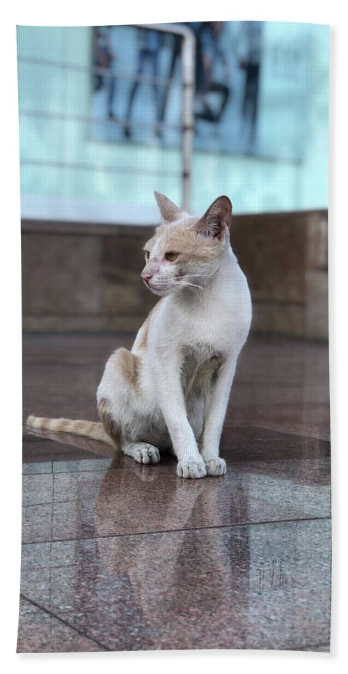 Wallpaper Bath Towel featuring the photograph Cat Sitting On Marble Floor by Prashant Dalal