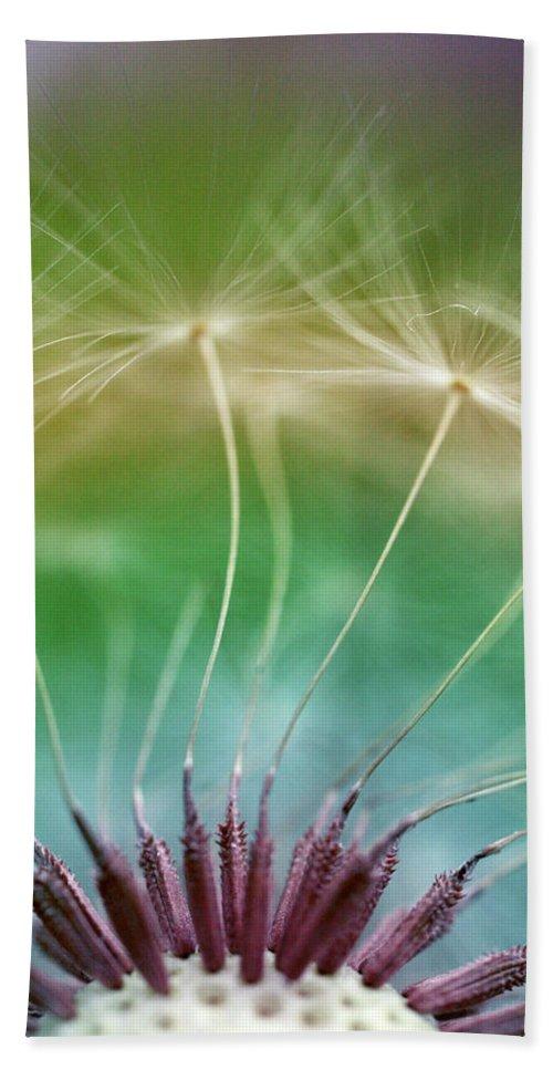 Dandelion Seeds Bath Towel featuring the photograph Dandelion Seeds Macro Photograph by Trevor Slauenwhite