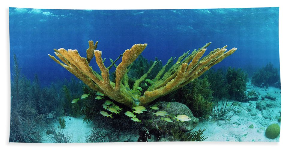 70007084 Bath Towel featuring the photograph Elkhorn Coral by Hans Leijnse