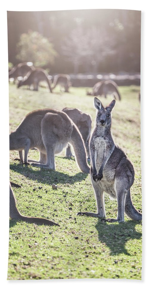 Kremsdorf Bath Towel featuring the photograph In The Land Down Under by Evelina Kremsdorf