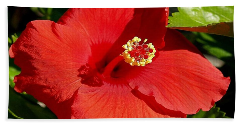 Fine Art Photography Hand Towel featuring the photograph Leila by Patricia Griffin Brett