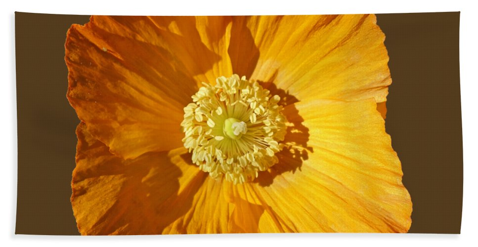 Yellow Poppy Bath Towel featuring the painting Poppy by Charles Stuart