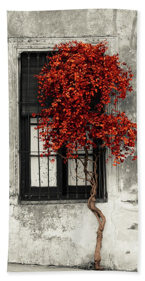 Architecture Black And White Building Structure Colonia Del Sacramento Day House Latin America No People Old Outdoors Peeling Photography Street Travel Destinations Tree Uruguay Vertical Weathered Window Calle San Jose Colonia Department Color Pop Red Hand Towel featuring the photograph Red Color Pop Tree in front of the window of a house, Calle San Jose, Colonia Del Sacramento, Urugua by Panoramic Images